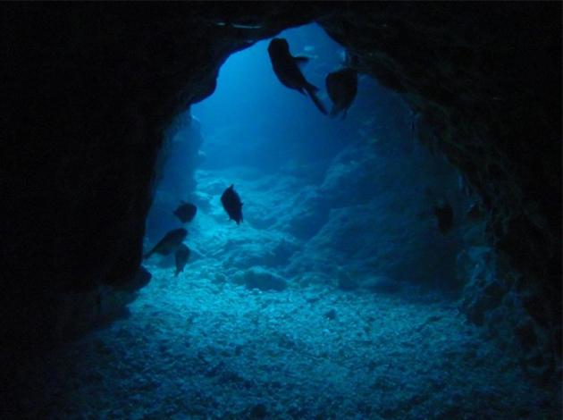 【日本沖繩】Okinawa慶良間能見50米玻璃海!吃好住好潛好 4日 2