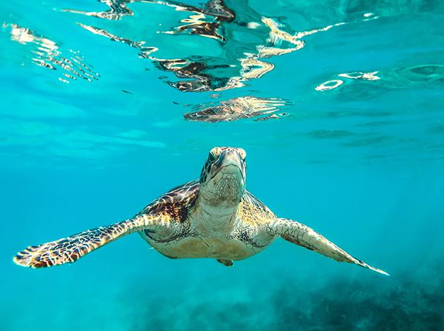 【日本沖繩】Okinawa慶良間能見50米玻璃海!吃好住好潛好 4日 1