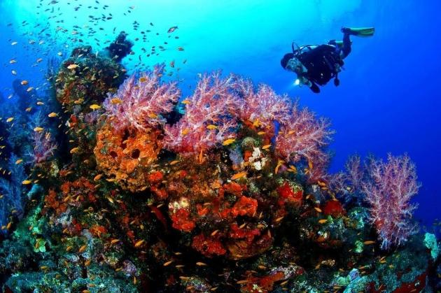 【汶萊】Brunei 潛進神祕的國度探索婆羅洲上閃亮的明珠|五天四夜/潛水6支/2人成行 3
