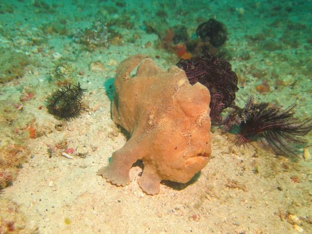 【菲律賓明多洛】Puerto Galera海底寶藏微距沈船,夜生活天堂|5日 2