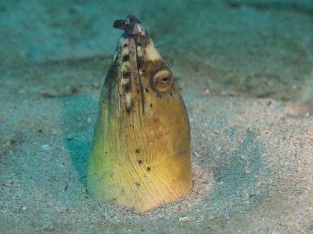 【菲律賓明多洛】Puerto Galera海底寶藏微距沈船,夜生活天堂|5日 7
