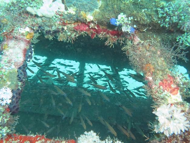 【菲律賓明多洛】Puerto Galera海底寶藏微距沈船,夜生活天堂|5日 10