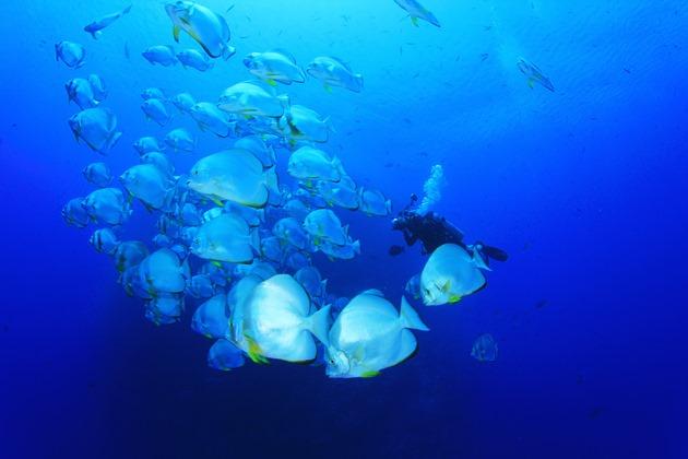 【馬來西亞西巴丹】Sipadan絕美潛水勝地,隆頭鸚哥,傑克魚風暴|5日 6