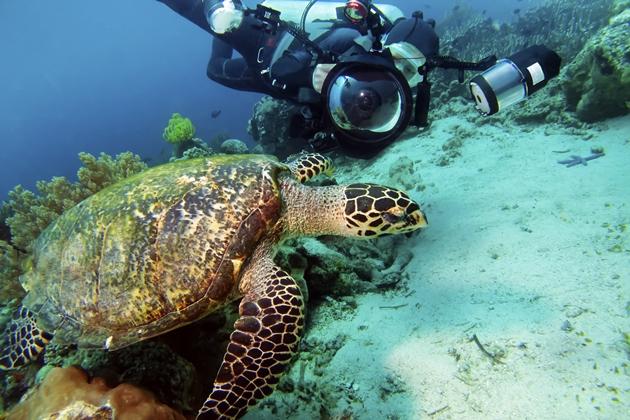 【馬來西亞西巴丹】Sipadan絕美潛水勝地,隆頭鸚哥,傑克魚風暴|5日 1