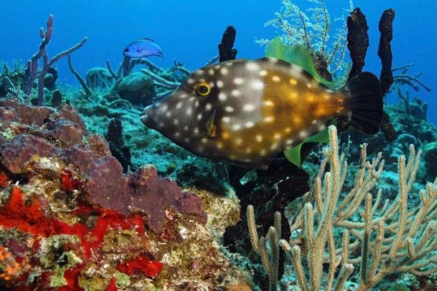 【馬來西亞西巴丹】Sipadan絕美潛水勝地,隆頭鸚哥,傑克魚風暴|5日 2