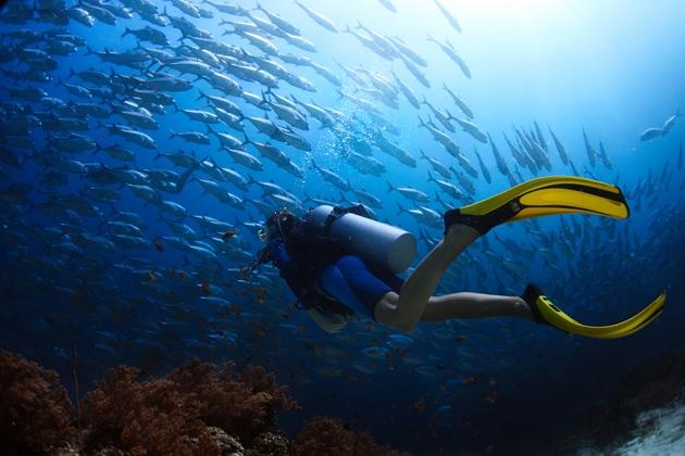 【馬來西亞西巴丹】Sipadan絕美潛水勝地,隆頭鸚哥,傑克魚風暴|5日 4
