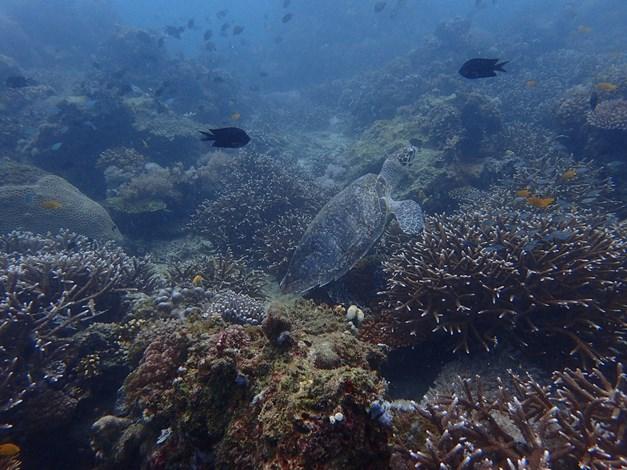 【菲律賓薄荷島】Bohol參觀鯨鯊花園,深入大斷層直擊魚球風暴|5日 6