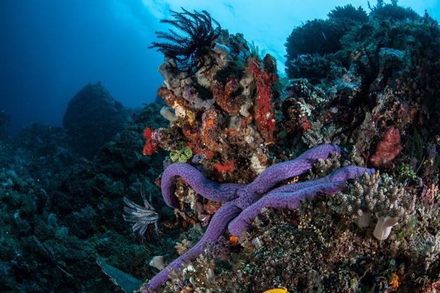 【印尼圖藍本】Tulamben微距攝影天堂,甜甜圈海蛞蝓|5日 5