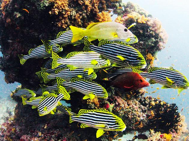 【馬爾地夫】Maldives達拉萬度(DHARAVANDHOO)神祕浮潛趣|自由行6天(限定出發日) 6