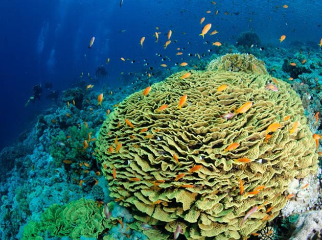 【埃及北紅海】North Red Sea金字塔豪華船宿潛水|8日 7