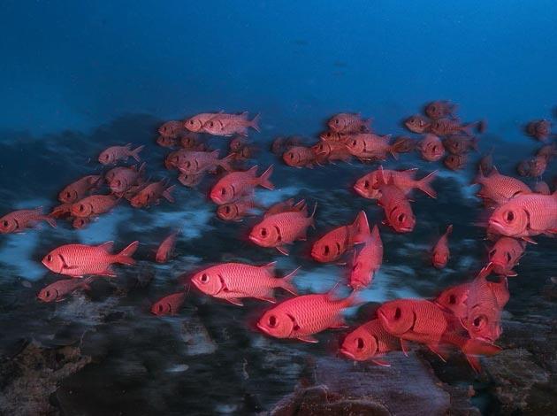 【帛琉Palau】4天船潛7支+水母湖浮潛(晨潛交配秀、無人島BBQ、夜潛) 最低6人開團 3
