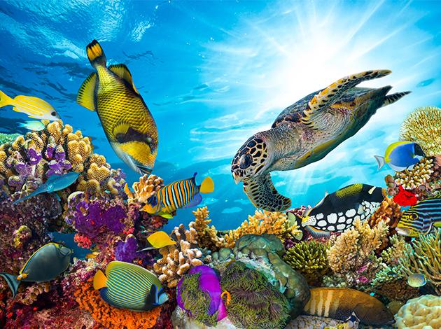 【夏威夷歐胡島、茂宜島】Oahu阿囉哈夏威夷,海陸玩透透|自由行12日(不含機票) 4
