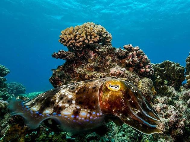 【澳洲凱恩斯大堡礁】Great Barrier Reef大堡礁豪華船宿,在雨林中騎馬當牛仔|自由行8日,船宿4天(不含機票) 8