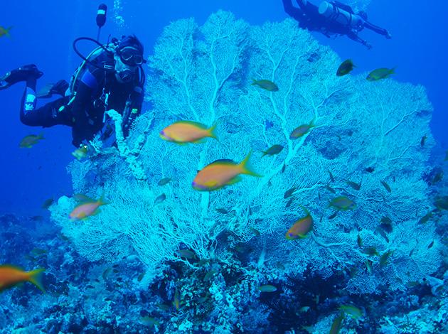 【埃及北紅海】North Red Sea金字塔豪華船宿潛水|8日 9