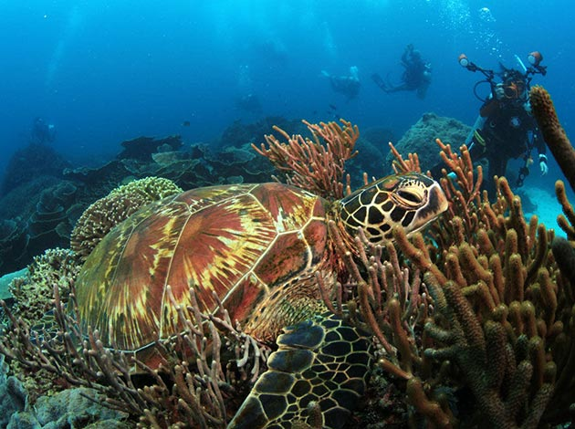 【印尼科摩多】Komodo探險侏儸紀與潛水天堂 豪華船宿潛水 自由行8日(不含機票) 2