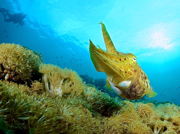【印尼四王群島】Raja Ampat世界的盡頭,潛水員的夢想|自由行6日(不含機票) 3