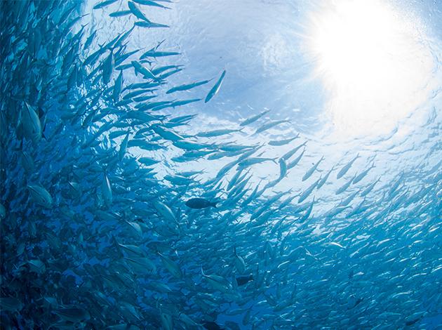 【帛琉Palau】潛水看鯊魚城,蝠魟,蘇眉魚,晚上做水療紓壓,玩滑水道 自由行5日(帛琉唯一滑水梯養生水療池飯店) 4
