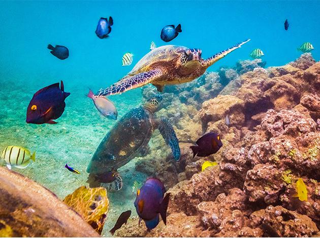 【夏威夷歐胡島、茂宜島】Oahu阿囉哈夏威夷,海陸玩透透 自由行12日(不含機票) 6