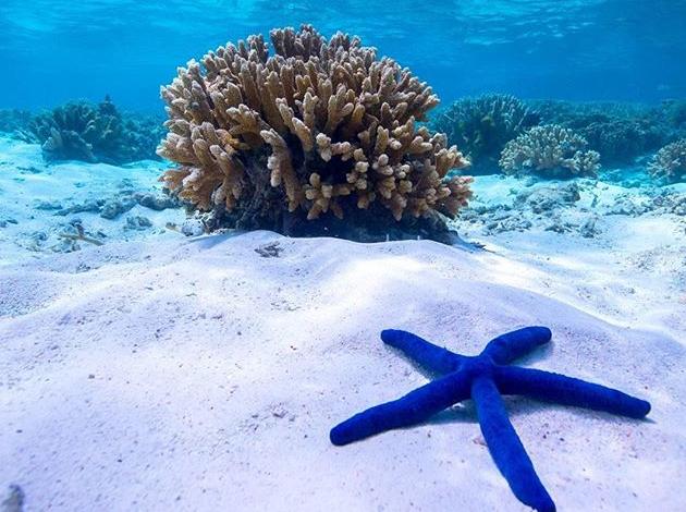 【澳洲凱恩斯大堡礁】Great Barrier Reef大堡礁豪華船宿,在雨林中騎馬當牛仔|自由行8日,船宿4天(不含機票) 3