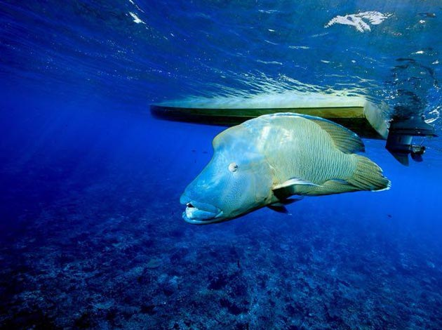 【帛琉Palau】4天船潛7支+水母湖浮潛(晨潛交配秀、無人島BBQ、夜潛) 最低6人開團 1