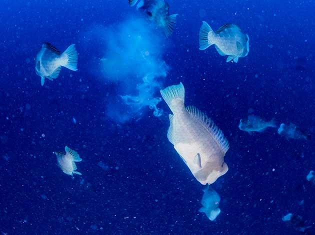 【帛琉Palau】4天船潛7支+水母湖浮潛(晨潛交配秀、無人島BBQ、夜潛) 最低6人開團 2