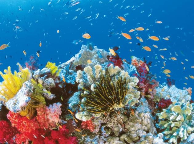 【澳洲凱恩斯大堡礁】Great Barrier Reef大堡礁豪華船宿,在雨林中騎馬當牛仔|自由行8日,船宿4天(不含機票) 5