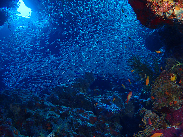【埃及北紅海】North Red Sea金字塔豪華船宿潛水 8日 2