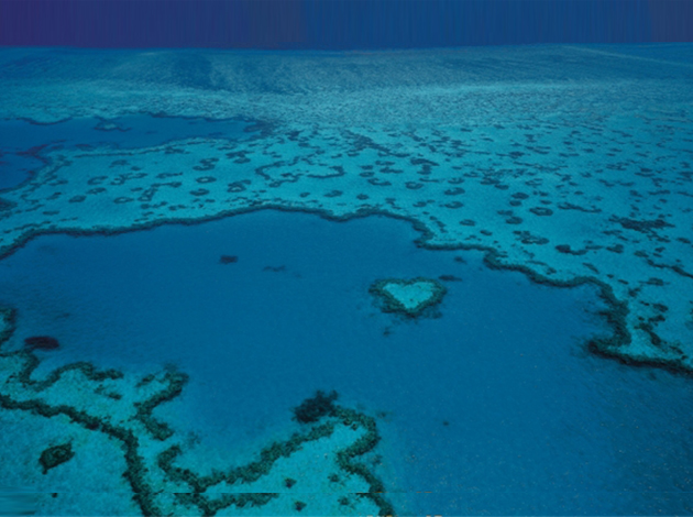 【澳洲凱恩斯大堡礁】Great Barrier Reef大堡礁豪華船宿,在雨林中騎馬當牛仔|自由行8日,船宿4天(不含機票) 6