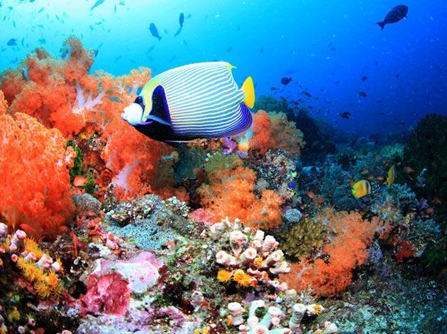【印尼科摩多】Komodo探險侏儸紀與潛水天堂 豪華船宿潛水 自由行8日(不含機票) 1