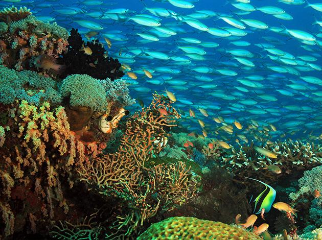 【印尼四王群島】Raja Ampat世界的盡頭,潛水員的夢想|自由行6日(不含機票) 5