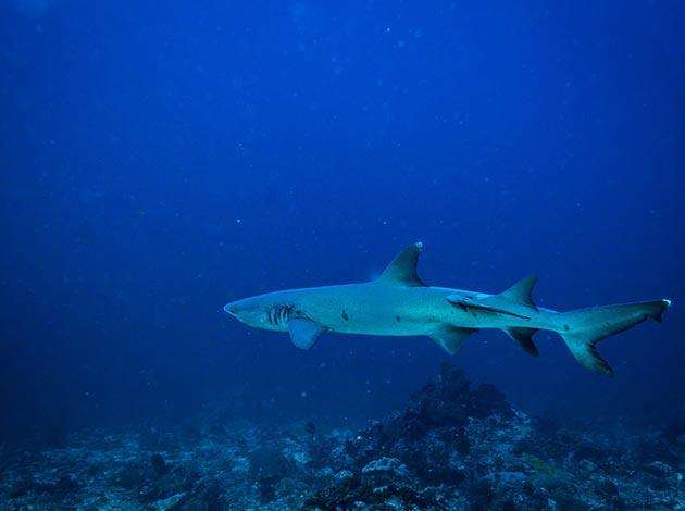 【印尼科摩多】Komodo探險侏儸紀與潛水天堂 豪華船宿潛水 自由行8日(不含機票) 4