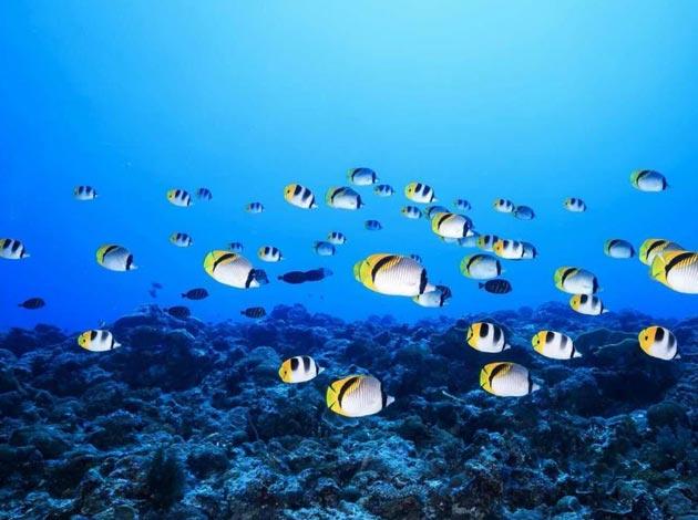 【帛琉Palau】4天船潛7支+水母湖浮潛(晨潛交配秀、無人島BBQ、夜潛) 最低6人開團 6