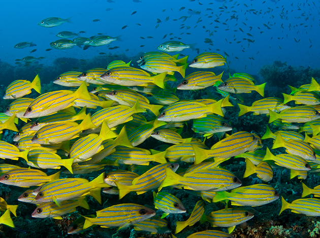【帛琉Palau】品質最好,價格最低,帛琉潛點一次解鎖|自由行4日(每周三,五出發,3人成行) 1