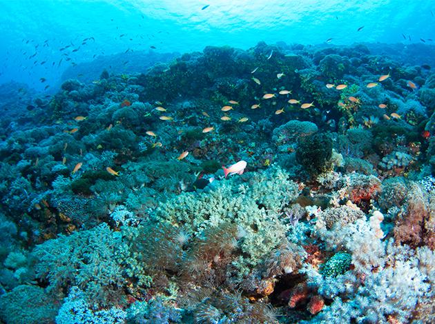探索蘭嶼潛水4天(8潛) 出團日:2021/05/28 1
