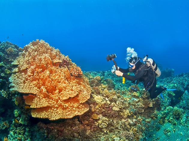 【夏威夷歐胡島、茂宜島】Oahu阿囉哈夏威夷,海陸玩透透 自由行12日(不含機票) 3