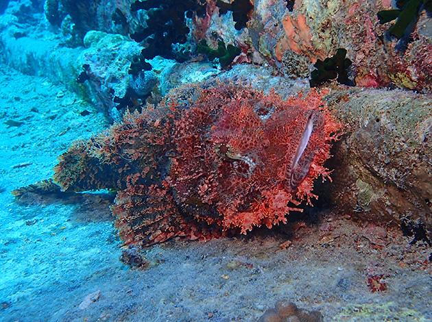 【埃及北紅海】North Red Sea金字塔豪華船宿潛水|8日 4