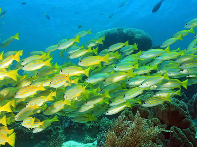 【印尼四王群島】Raja Ampat世界的盡頭,潛水員的夢想|自由行6日(不含機票) 2