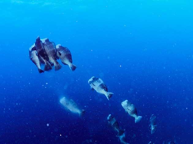 【帛琉Palau】4天船潛7支+水母湖浮潛(晨潛交配秀、無人島BBQ、夜潛) 最低6人開團 4