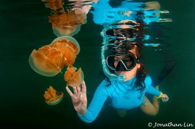 【印尼達拉灣】Derawan 這輩子必去!全世界最棒的潛水點,鯨鯊群!海龜產卵!水母湖!蝠魟風暴!|7日 2