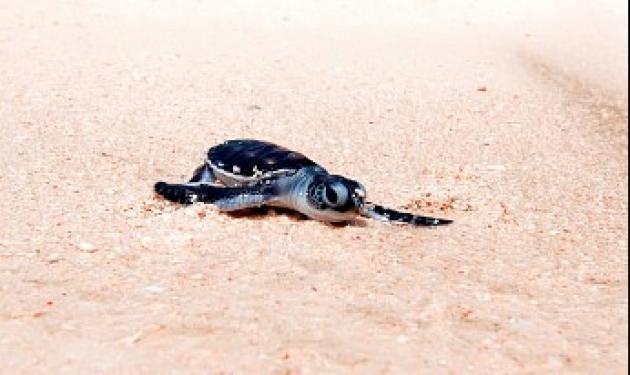 【印尼達拉灣】Derawan 這輩子必去!全世界最棒的潛水點,鯨鯊群!海龜產卵!水母湖!蝠魟風暴!|7日 1