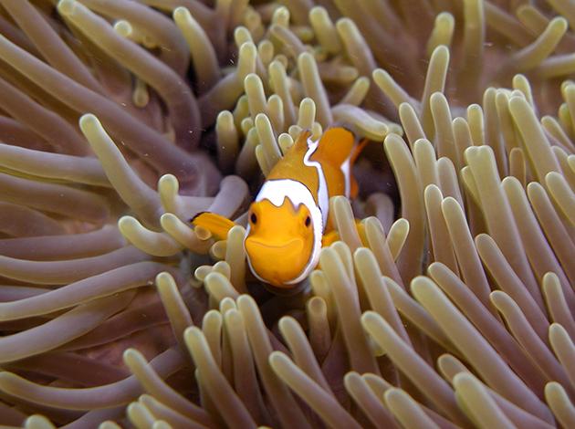 【澳洲凱恩斯大堡礁】Great Barrier Reef大堡礁豪華船宿,在雨林中騎馬當牛仔|自由行8日,船宿4天(不含機票) 1