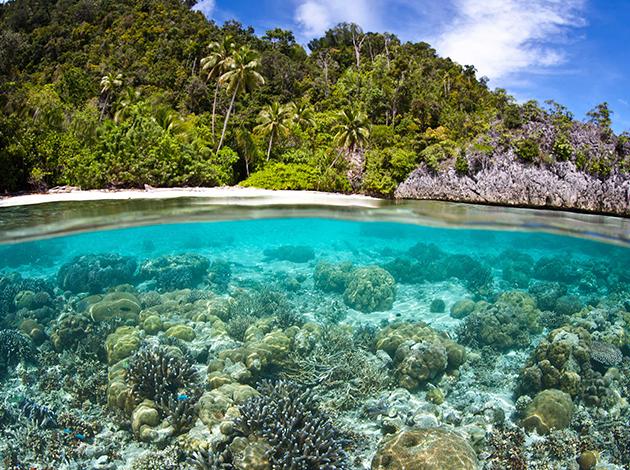 【印尼四王群島】Raja Ampat世界的盡頭,潛水員的夢想|自由行6日(不含機票) 1